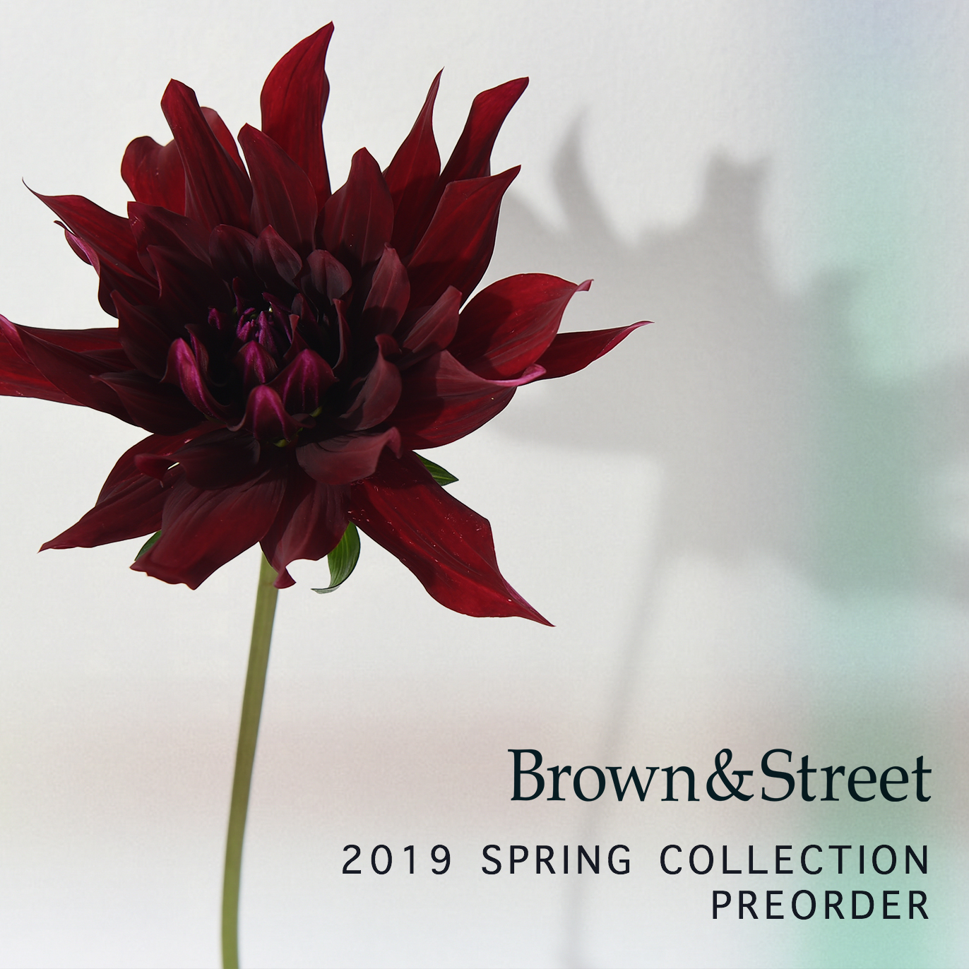 【Brown&Street 2019 SPRING COLLECTION PLEORDER】